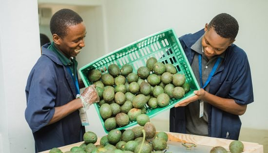East-Africa-Fruits-employees-during-the-distribution-process