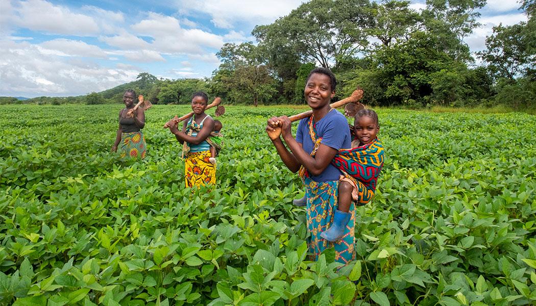 Social-Enterprise-Partner-GNA-Farmers-in-the-Field