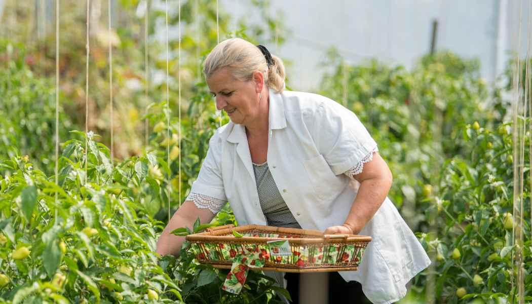 Xheva Haziri picking vegetables in Kosovo.